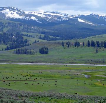 lamar-valley