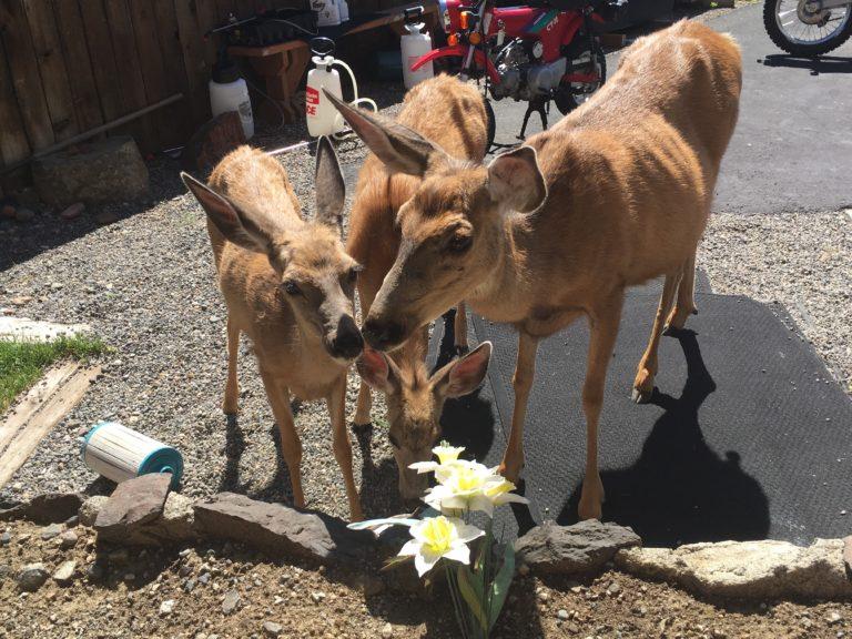 deers-huddling